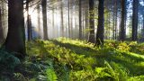 forest_0001_layer-6